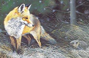 Foxhedge1
