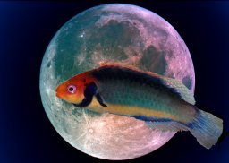 Fishmoon_2